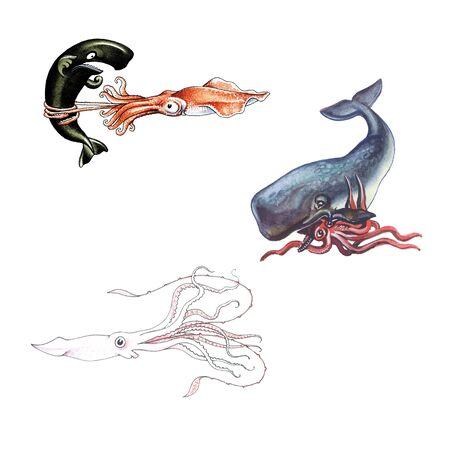 cachalot: Squid Stock Photo