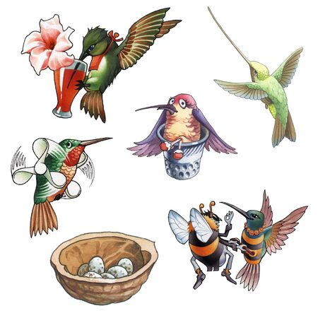 teeny: hummingbird, humming bird, colibry  Stock Photo
