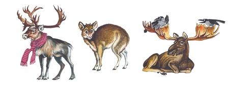 Elk or moose, Pudu, Reindeer (Caribou)  photo