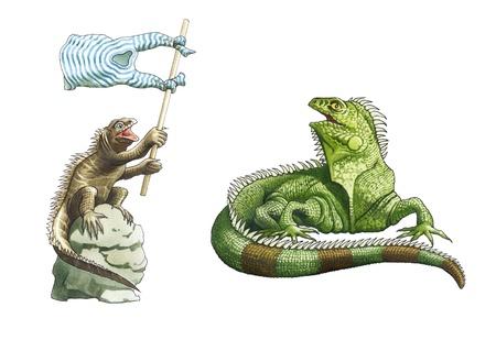 big iguana and sea iguana Stock Photo