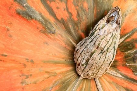 pumpkin Stock Photo - 10548288
