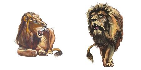 Lion Stock Photo