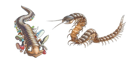 millipede and scolopendra