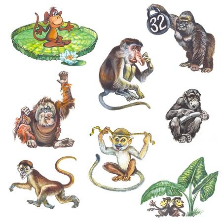 Monkey Stock Photo - 12851825