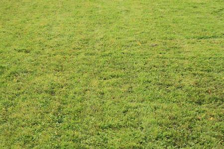 lawn Stock Photo
