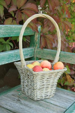 Ripe apple in braided basket