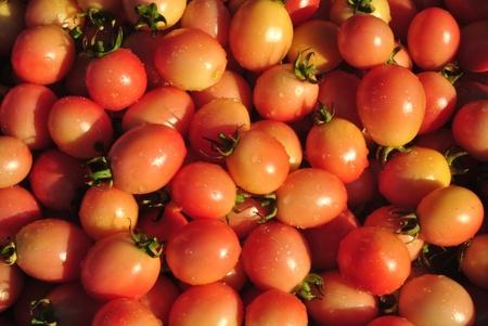tomato   in  thailand Stock Photo