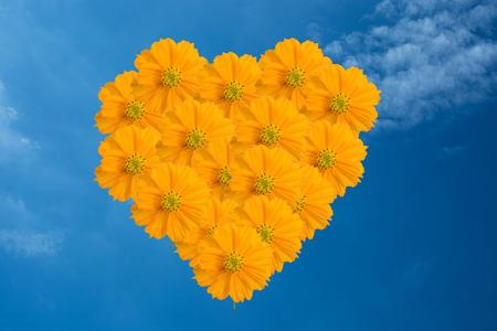 Yellow Cosmos Herzblume auf den blauen Himmel Standard-Bild - 31650887
