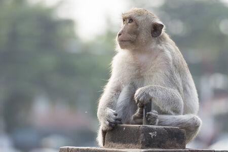 Der Affe leben in der Stadt Standard-Bild - 32606758