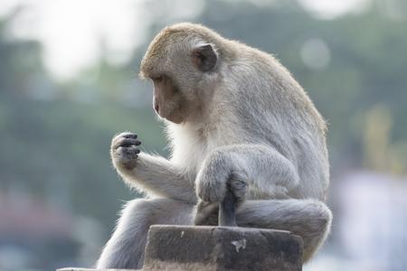 Der Affe in der Stadt leben Standard-Bild - 32606843
