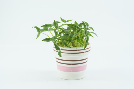 Grüne Mungbohne zu isolieren, auf dem weißen Hintergrund Standard-Bild - 46918634