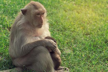Affe und jungen Affen auf grünem Gras, Vintage-Filter Standard-Bild - 48217435