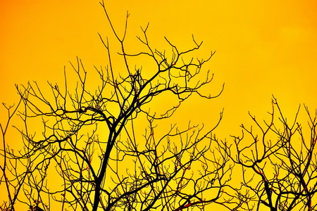 bough: bough of tree in the yellow sky