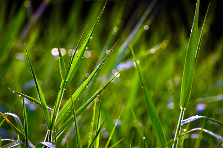dew: Dew on the grass Stock Photo