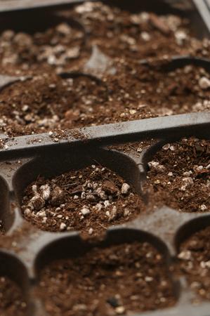 starter: Seed Starter