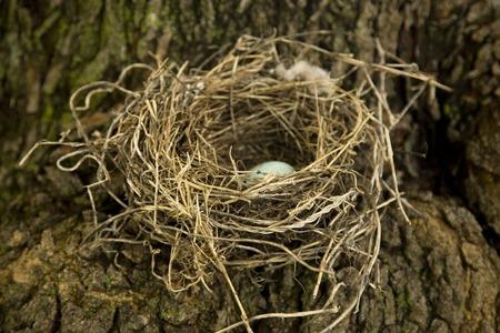 Natural Birds Nest Made of Sticks and Mud
