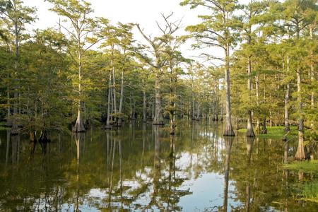 Beautiful View of a Louisiana Bayou Banco de Imagens - 112027996