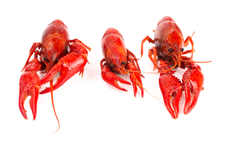 Cooked Red Crawfish Isolated on a White Background 写真素材