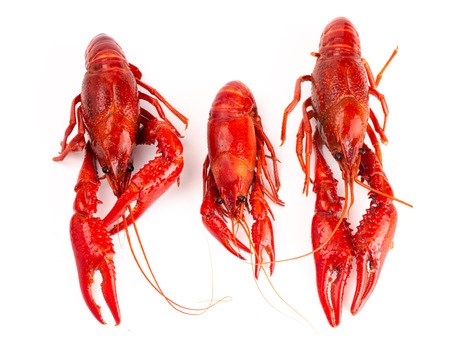 Cooked Red Crawfish Isolated on a White Background Imagens