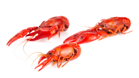 Cooked Red Crawfish Isolated on a White Background 免版税图像