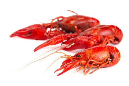 Cooked Red Crawfish Isolated on a White Background Stock Photo