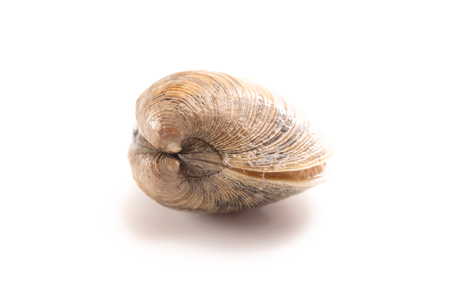 Clams Isolated on a White Background