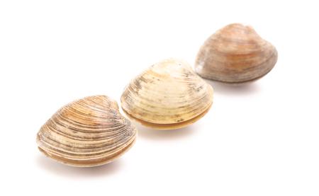 Muscheln isoliert auf weißem Hintergrund Standard-Bild