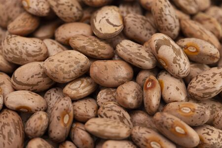 A Background of Pinto Beans