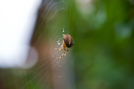 Close up of a spider on a spider web