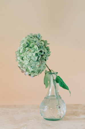 Still Life Of Hydrangea Flower In Glass Vase On Table With Copy