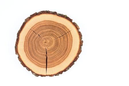 crossection van een eiken boomstam Stockfoto