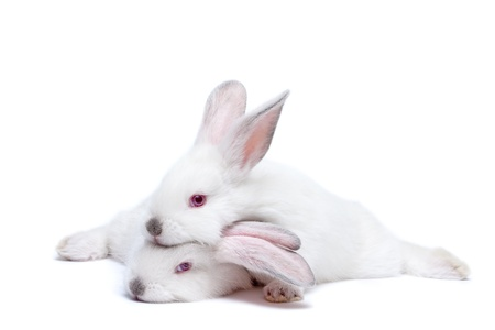 Two cute white isolated baby rabbits photo