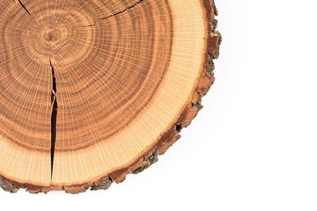 tronco: Nuestra de un tronco de �rbol de roble Foto de archivo