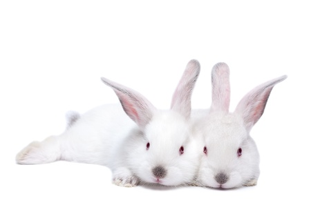 Two cute white isolated baby rabbits. photo