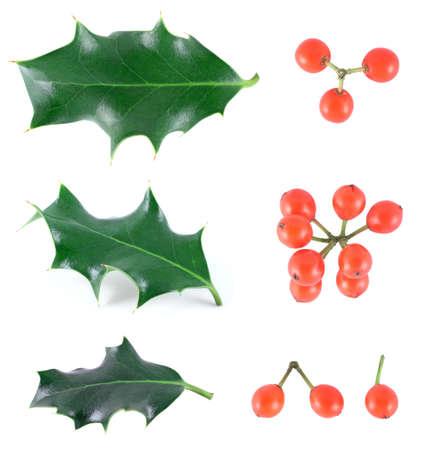 Holly (Ilex aquifolium) isolated on white