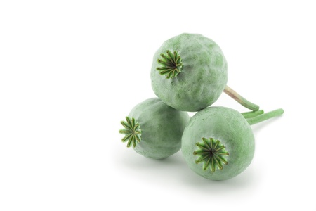 Heads of opium poppy