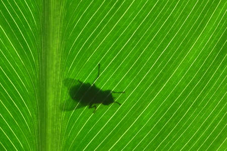 Silhouette of a fly on a leaf photo
