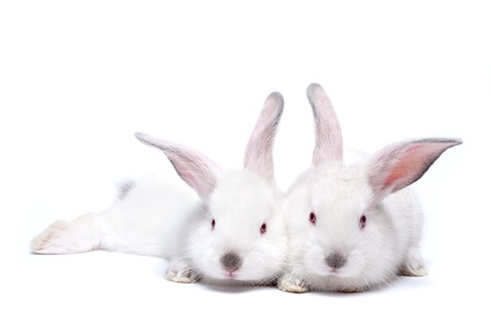 Two sweet white little easter bunnies isolated