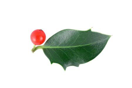 houx: Holly (Ilex aquifolium) isol� sur fond blanc