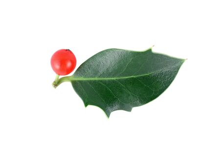 holly berries: Holly (Ilex aquifolium) isolated on white