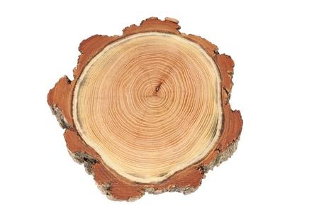 trunk  tree: crossection de un tronco de un �rbol de acacia