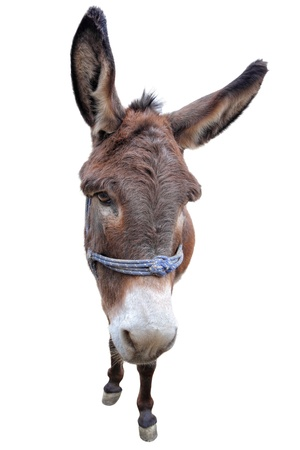 Portrait of a donkey
