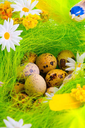 Green nest with eggs aming flowers photo