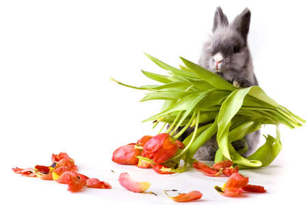 Bunny holding the rest of  tulips photo