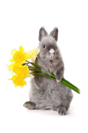 Bunny holding the yellow flowers photo