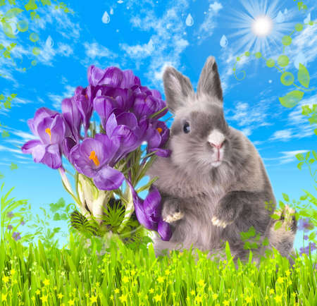 Easter bunny with bouquet of crocus in a meadow under the blue sky Stock Photo - 889966
