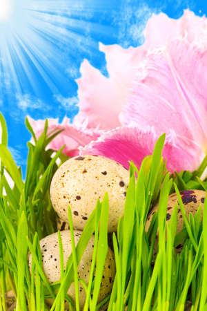 Easter eggs in flower of pink tulip under a bright blue sky with holy spirit light   photo