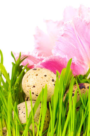 Easter eggs with flower of pink tulip, isolated photo