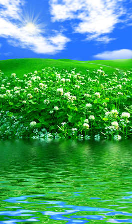 Beautiful clover field in bloom under a bright blue sky Stock Photo - 890590