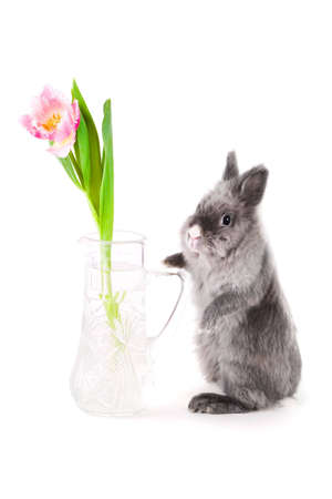 Bunny standing near the vase with tulip, isolated photo
